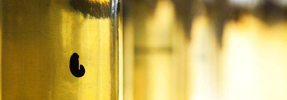 Пиявка как чудесный лекарьПиявка  может восстановить поврежденный сосуд, повысить эластичность стенок сосудов. В любом возрасте и при самых  разнообразных заболеваниях пиявка может принести эффект. ...